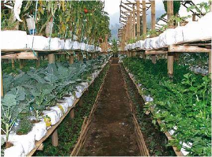 menanam sayur