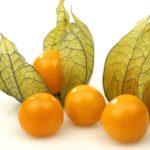 Mengetahui Khasiat Daun, Bunga dan Tanaman Ciplukan